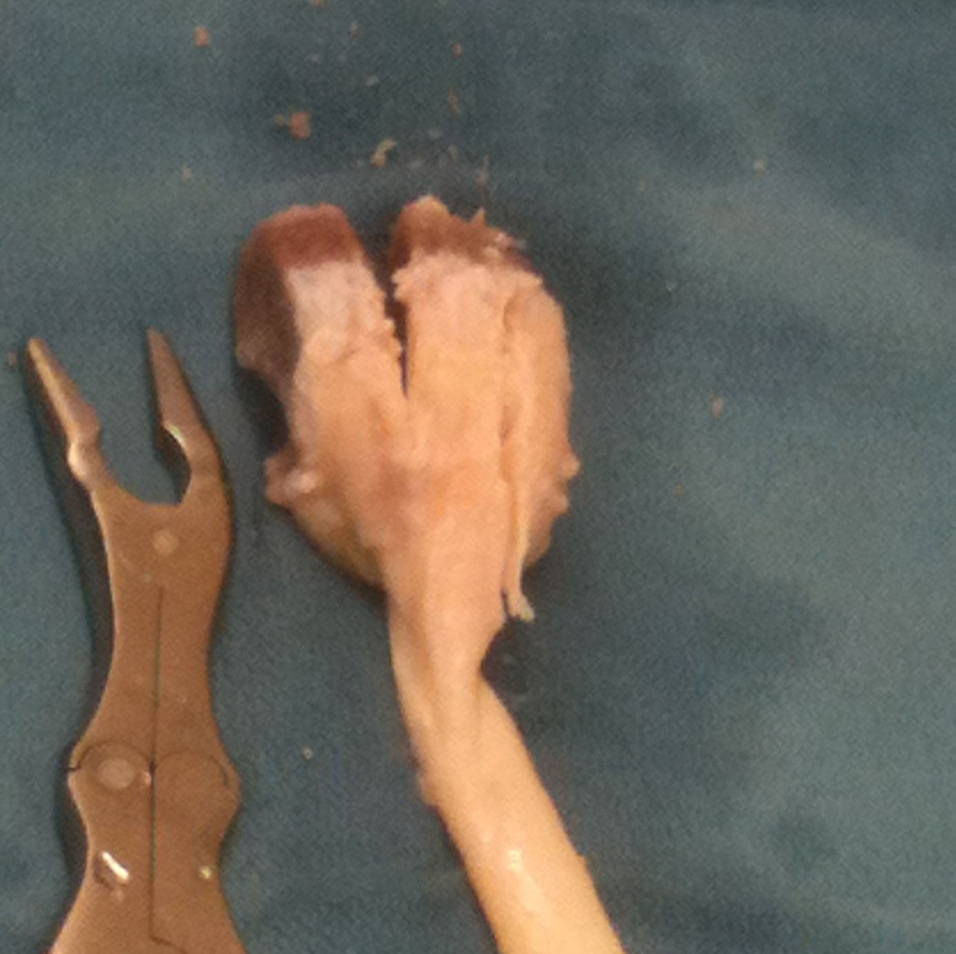 Achilles Allograft Saw Bone Block 2